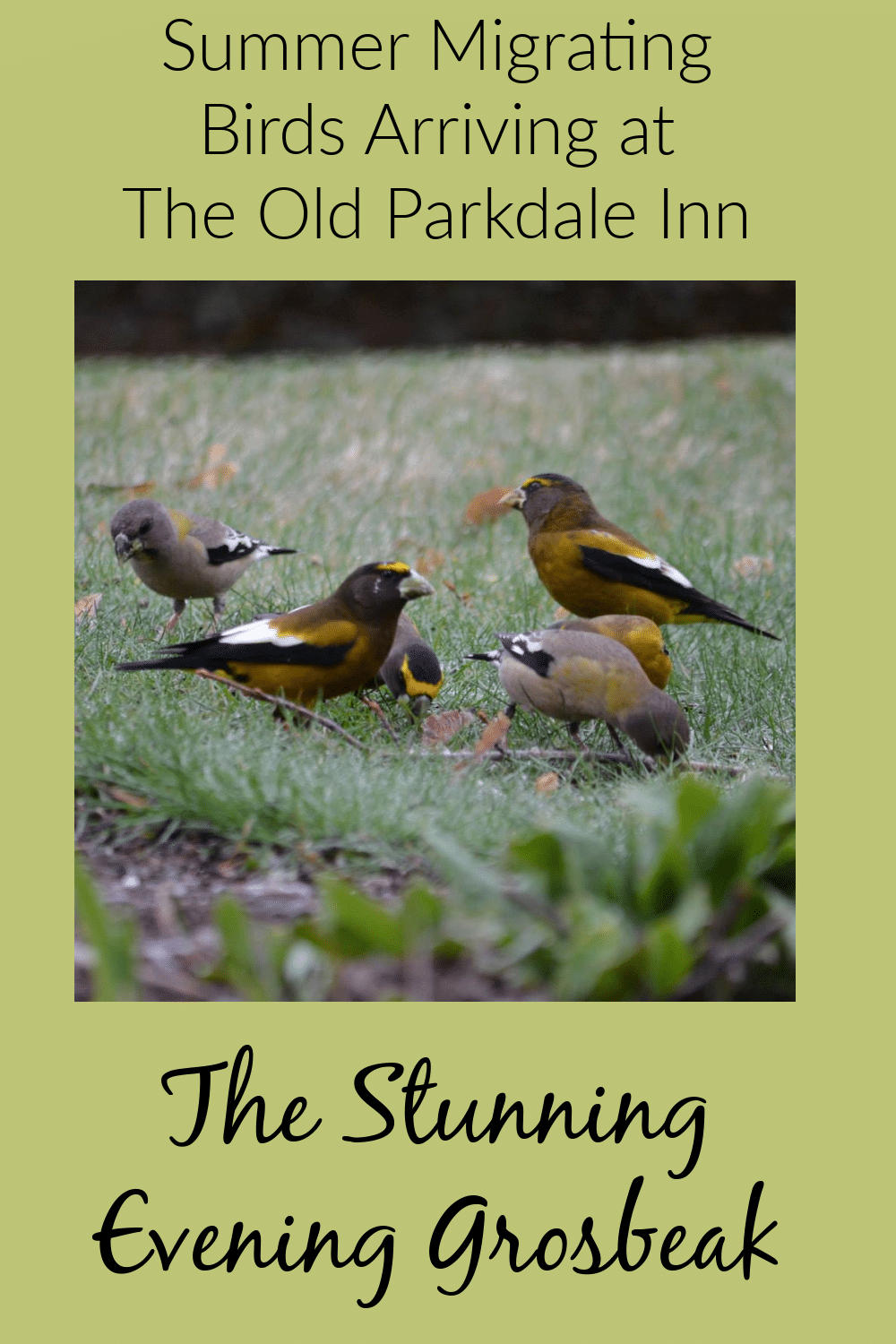 Spring and Summer Birds are returning to the Old Parkdale Inn Gardens, Old Parkdale Inn