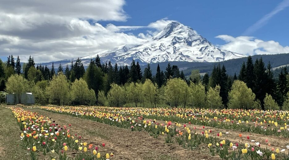 Mt View Orchards, Grateful Vineyards, and Fields of Flowers, Old Parkdale Inn